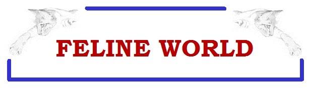 banniere_feline-world